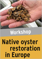 Native oyster restoration in Europe